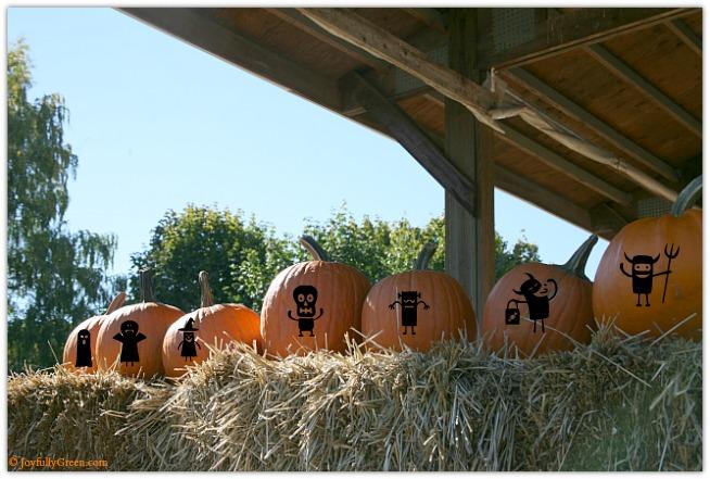 Pumpkins IMG_3827 © Joyfully Green LLC