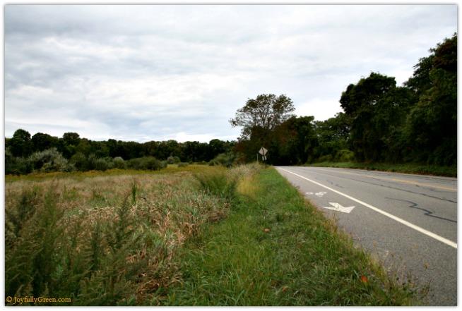Road 5d40 © Joyfully Green LLC