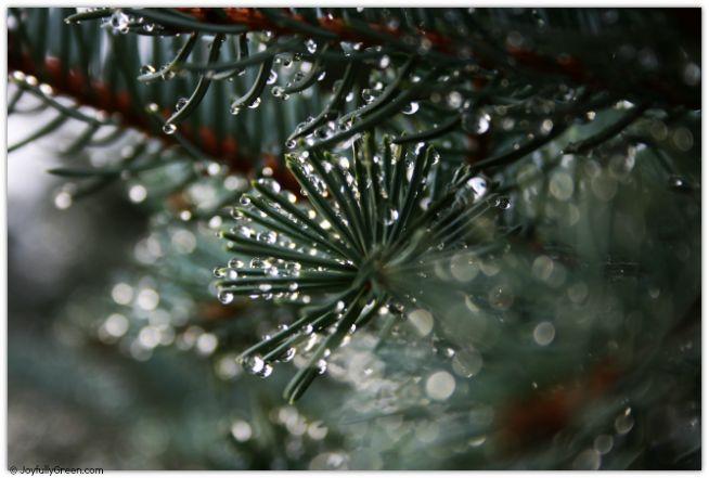 Bokeh Branch © Joy Sussman