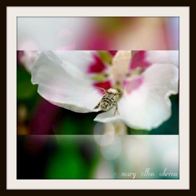 Mary Obrien-Art of Photo-Drunken Bee-FRAMED