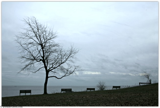 Bare Tree at Beach IMG_4857 © Joyfully Green LLC