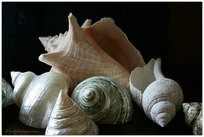 Shells resized © Joy Sussman Joyfully Green LLC