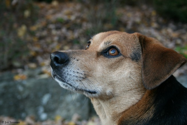 Dog resized © Joy Sussman Joyfully Green LLC