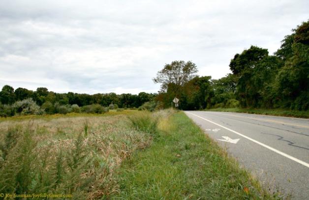 Road 2 5d40 © Joy Sussman Joyfully Green LLC
