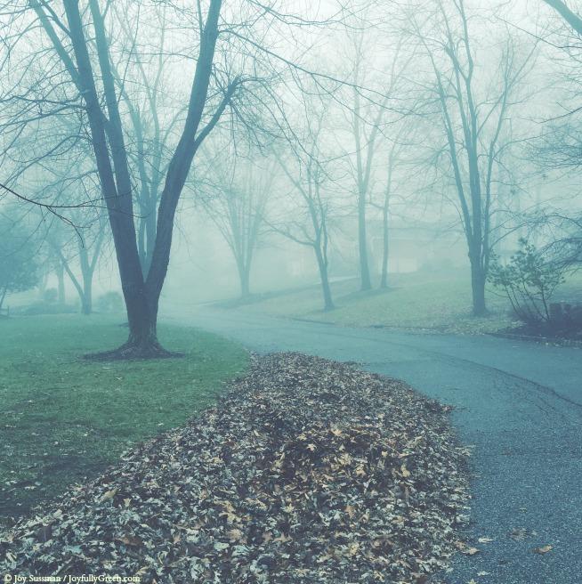 Green Fog © Joy Sussman - Joyfully Green LLC