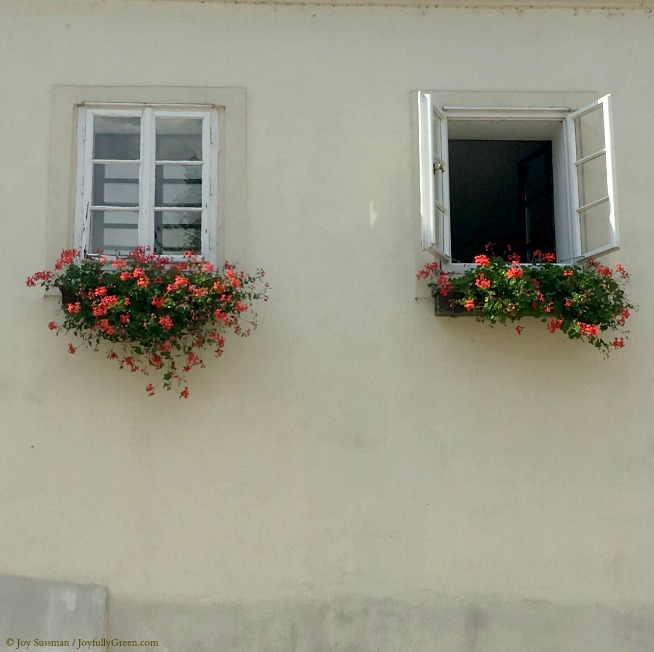 Prague Windows © Joy Sussman - Joyfully Green LLC