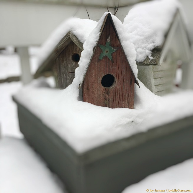 Birdhouses in Snow © Joy Sussman - Joyfully Green LLC