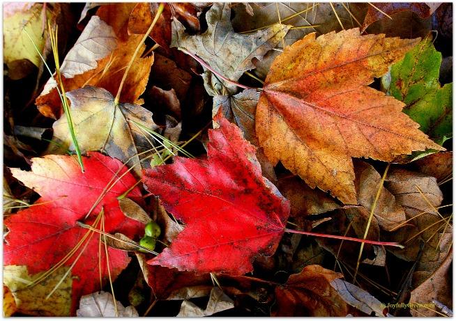 Autumn Leaves © Joyfully Green