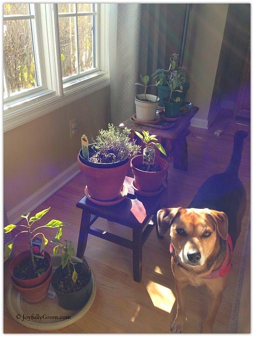Dog and Plants © Joyfully Green