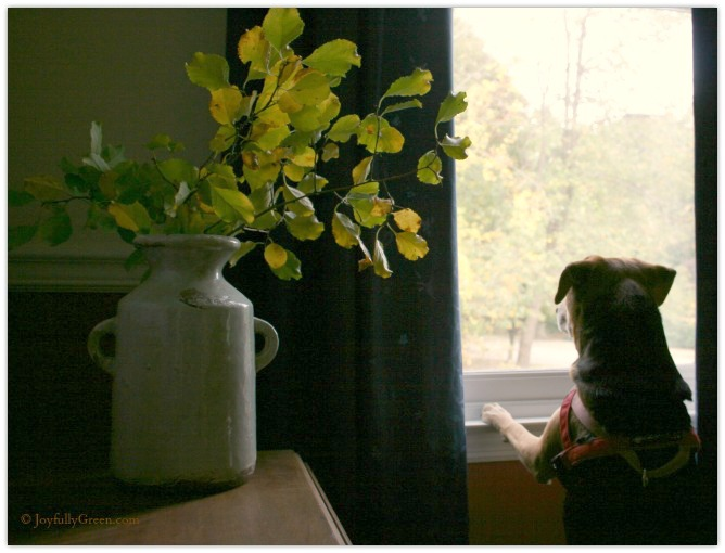Dog and Leaves 3 © Joyfully Green