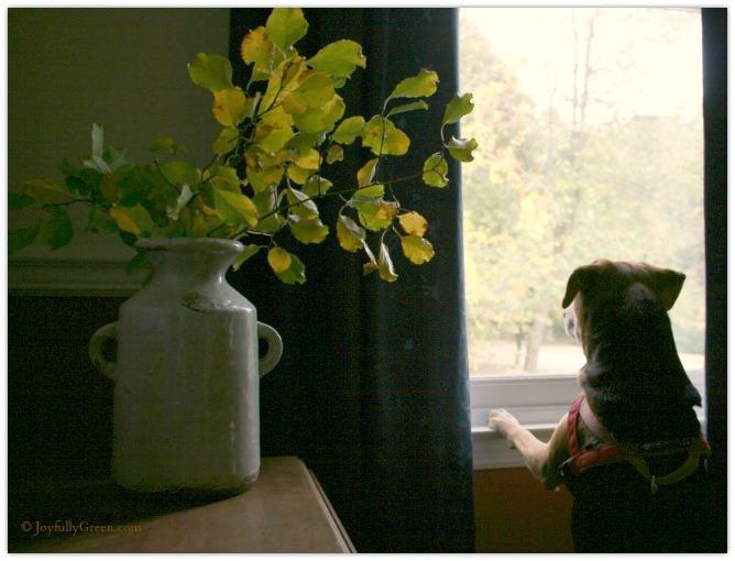 Dog and Leaves 3 © Joyfully Green