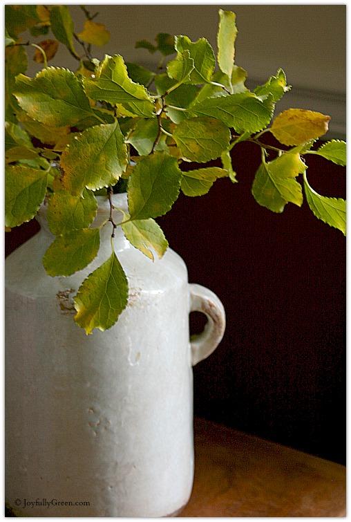 Leaf Bouquet 1 © Joyfully Green