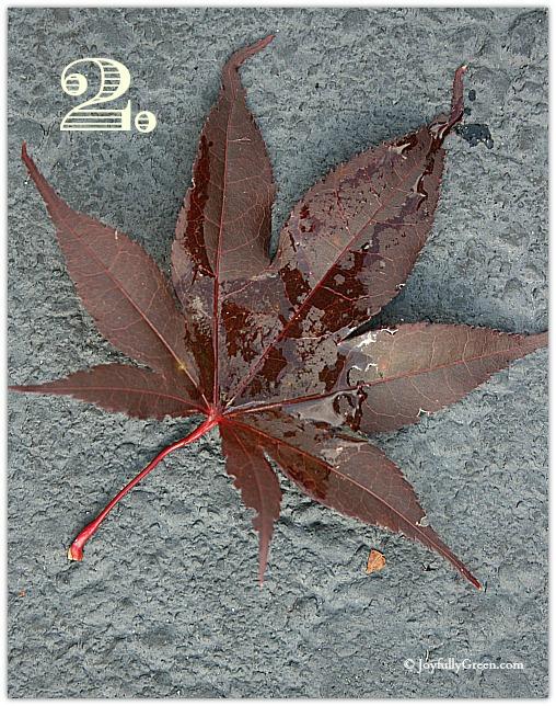 Leaf Sample 2a