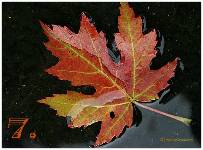 Leaf Sample 7