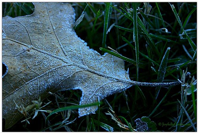 First Frost by Joyfully Green LLC