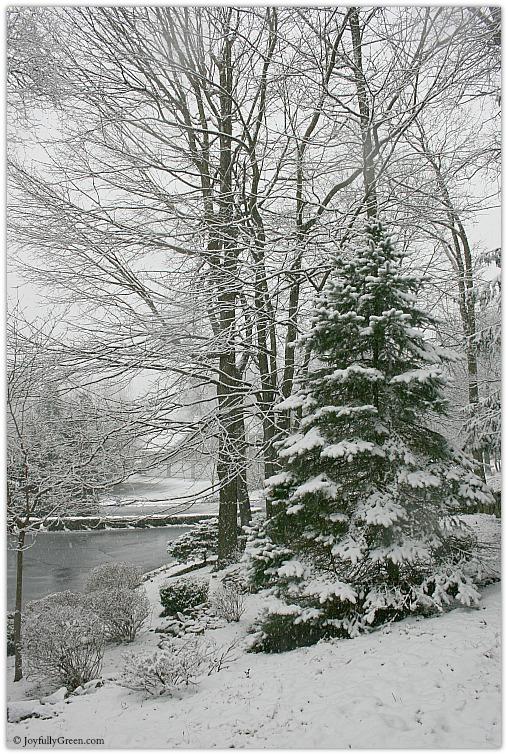 Snowy Day by Joyfully Green LLC