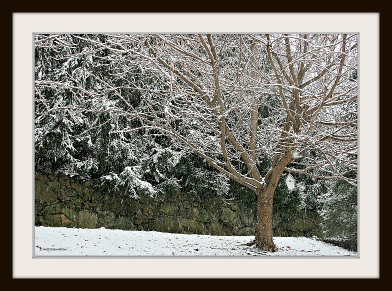 Snowy Day Framed by Joyfully Green