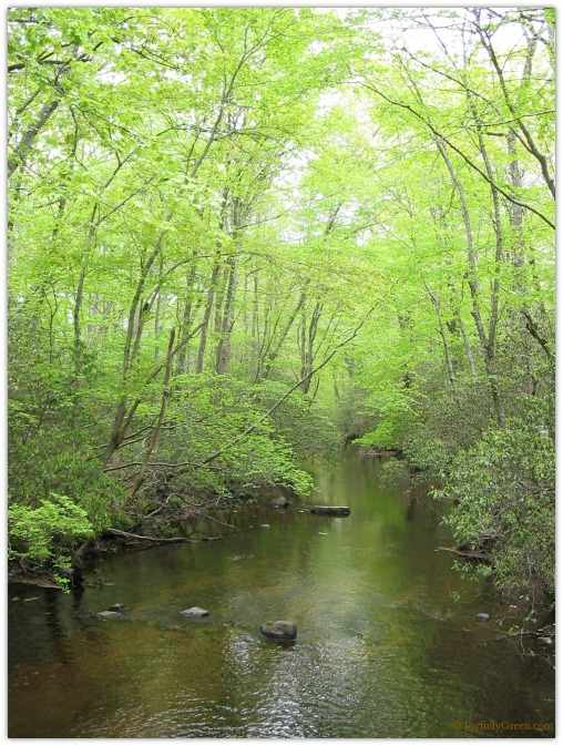 Green Woods Copyright Joyfully Green LLC