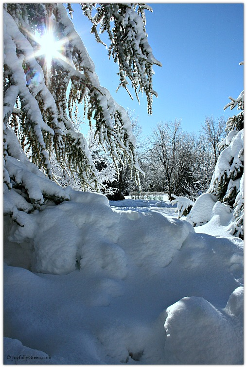 March Snow © Joyfully Green LLC