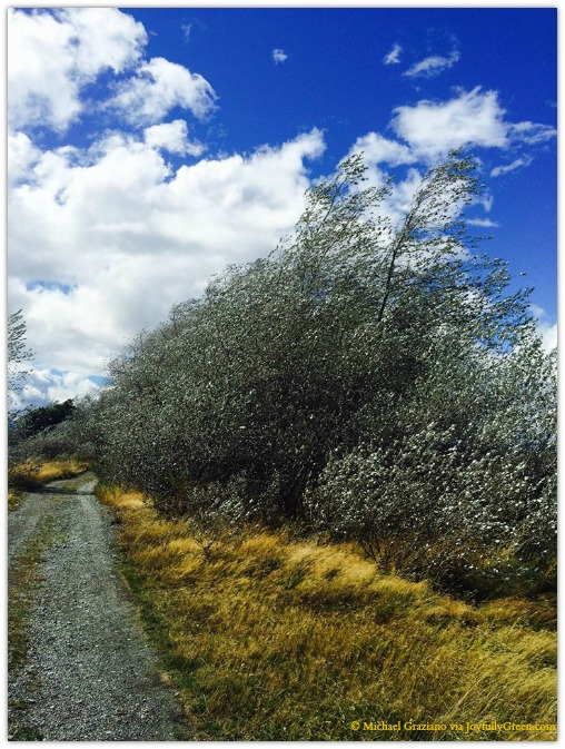 © Michael Graziano-New Zealand road