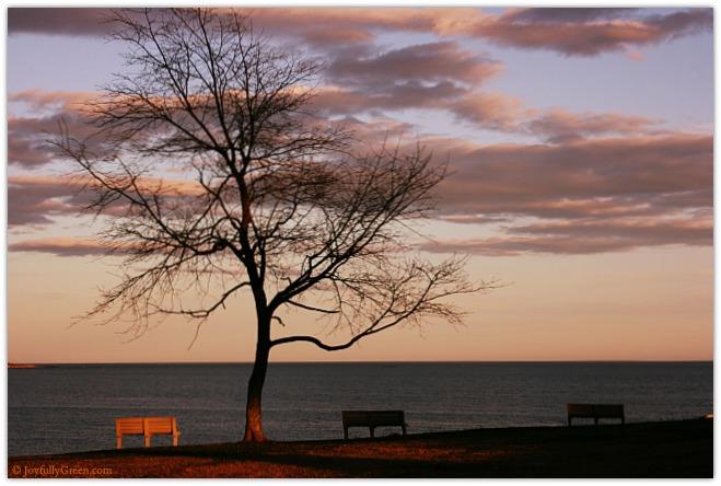 Connecticut Shoreline © Joyfully Green LLC