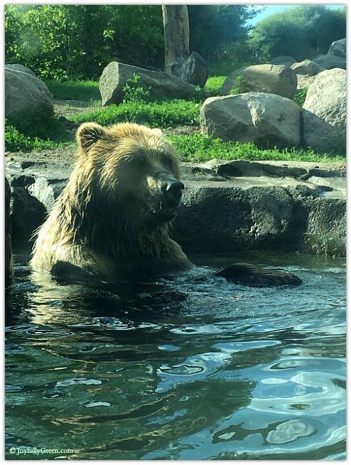 Zoo Bear © Joyfully Green LLC
