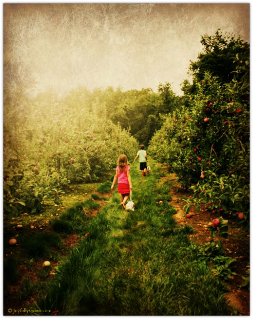Orchard on Papyrus © Joyfully Green LLC