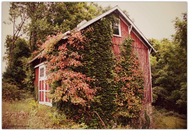 Barn in Autumn © Joyfully Green LLC