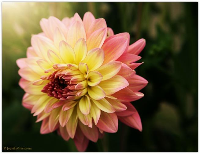 Sun High Blossom © Joyfully Green LLC