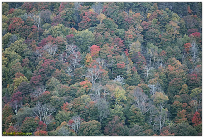 Catskills Foliage 4080 © Joyfully Green LLC