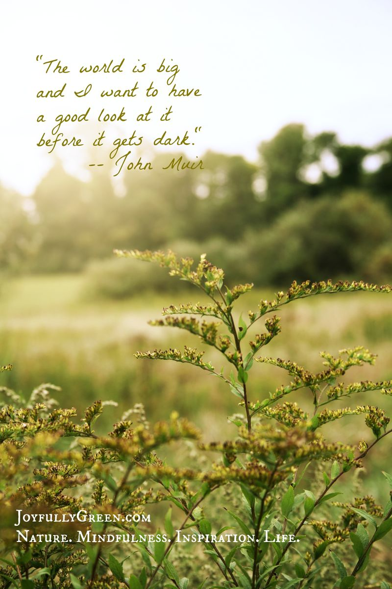 John Muir Quote Joyfully Green Logo Medium File Size 1.1 MB