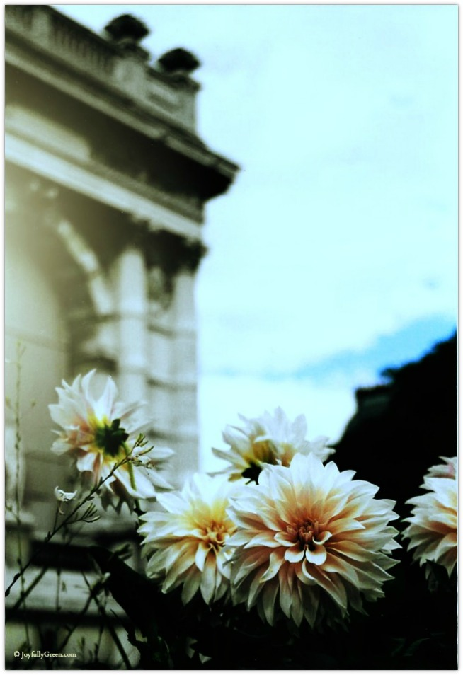 Paris Flowers © Joyfully Green LLC