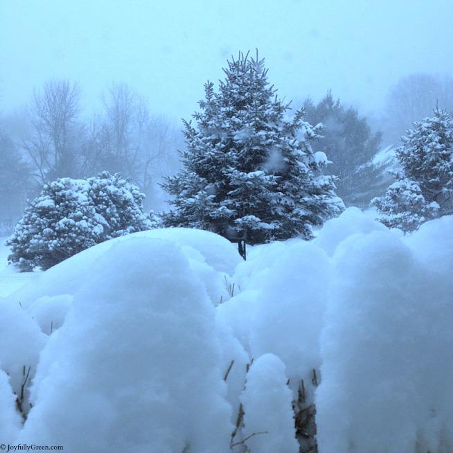 Snowstorm Jonas © Joyfully Green LLC