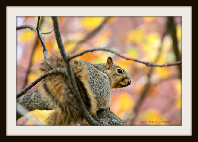 Lindy Warner-FRAMED-Oct 2015 Nature Photo-Lesson 5 squirrel