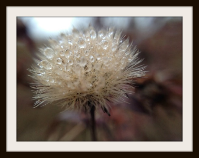 Kathy Stinson-FRAMED-Oct 2016 Nature Photo-IMG_0692