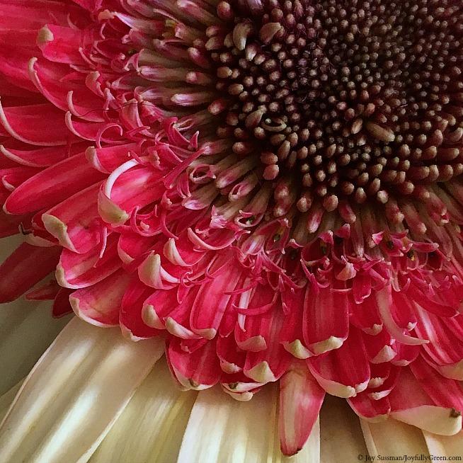Spring Bloom © Joy Sussman Joyfully Green LLC