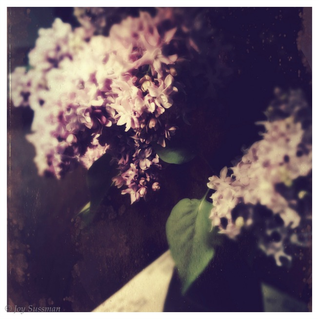 Lilacs TinType © Joy Sussman Joyfully Green LLC