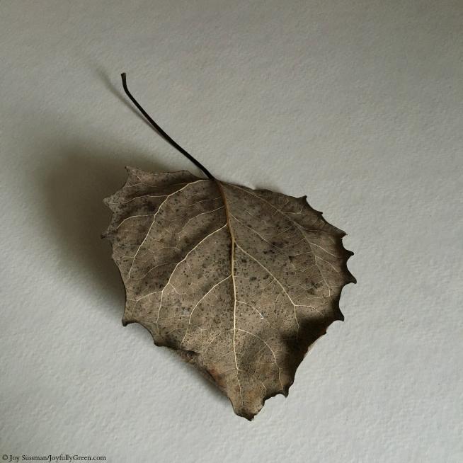 Leaf in September © Joy Sussman - Joyfully Green LLC