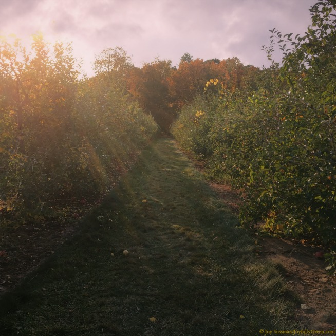 Orchard Path © Joy Sussman - Joyfully Green LLC