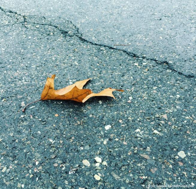 Leaf on Pavement © Joy Sussman - Joyfully Green LLC