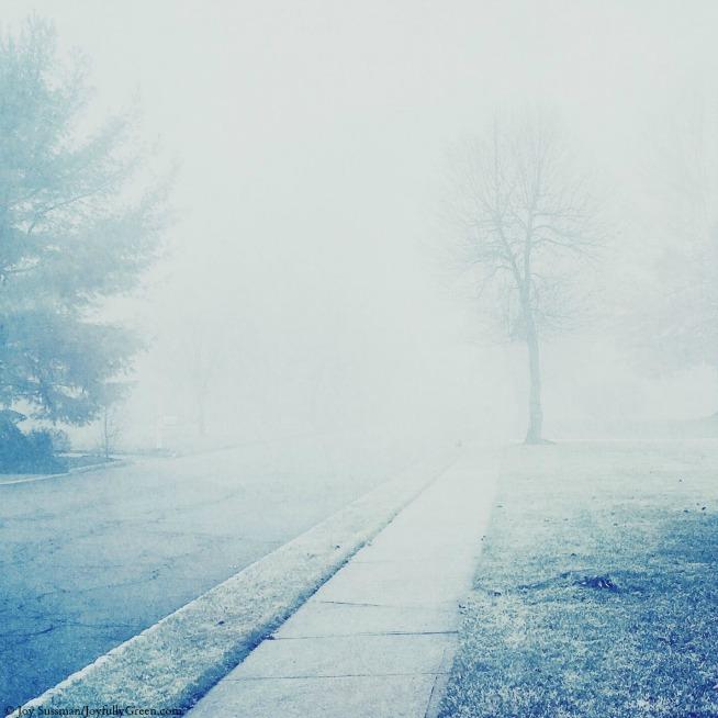 Foggy Morning © Joy Sussman - Joyfully Green LLC