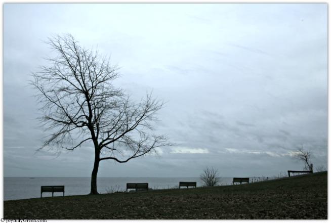 Bare Tree at Beach IMG_4857 © Joyfully Green LLC