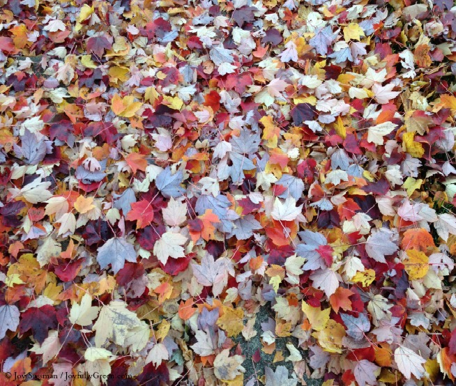 Fall Canvas © Joy Sussman - Joyfully Green LLC