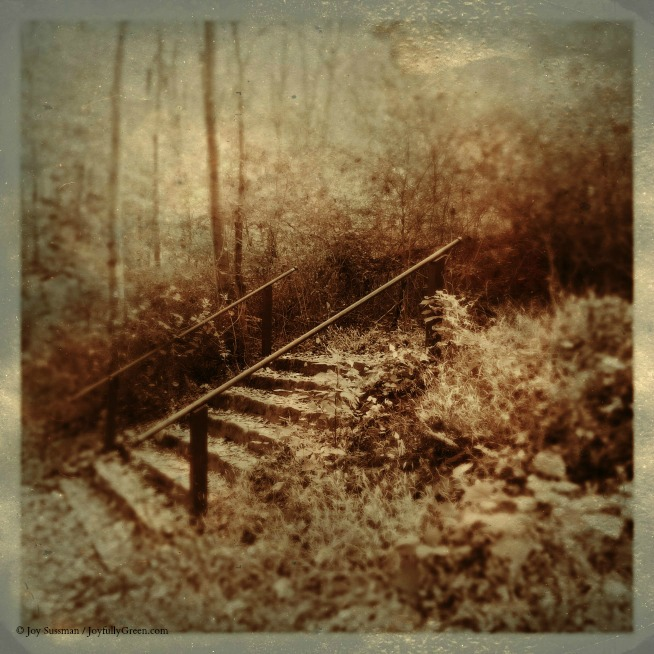 Pocket Photography Sepia Fall 2017 © Joy Sussman - Joyfully Green LLC