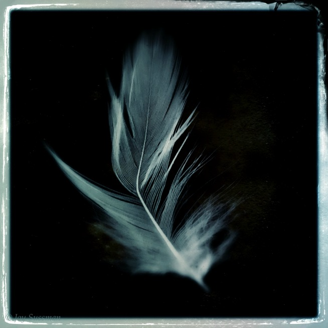 Pocket Photography 654 feather © Joy Sussman