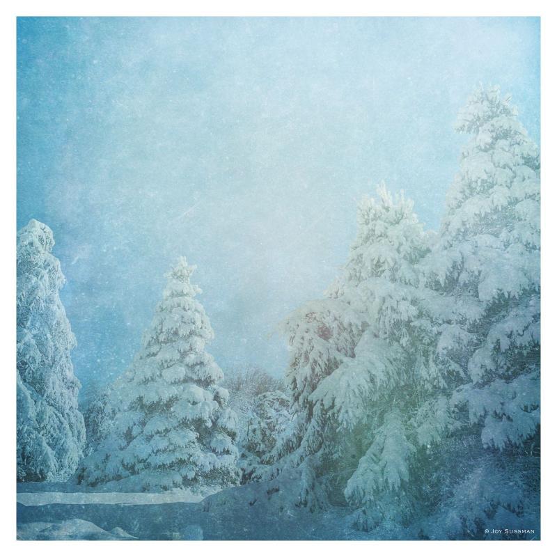 My Narnia © Joy Sussman