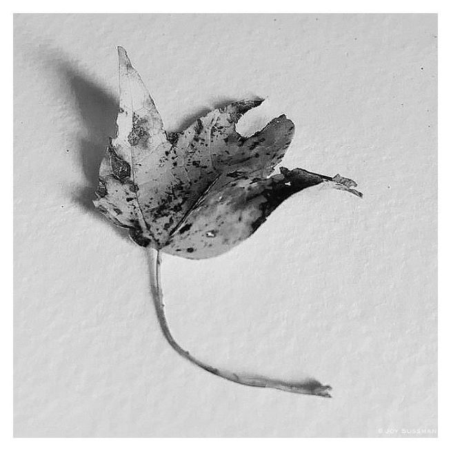 Leaf monochrome