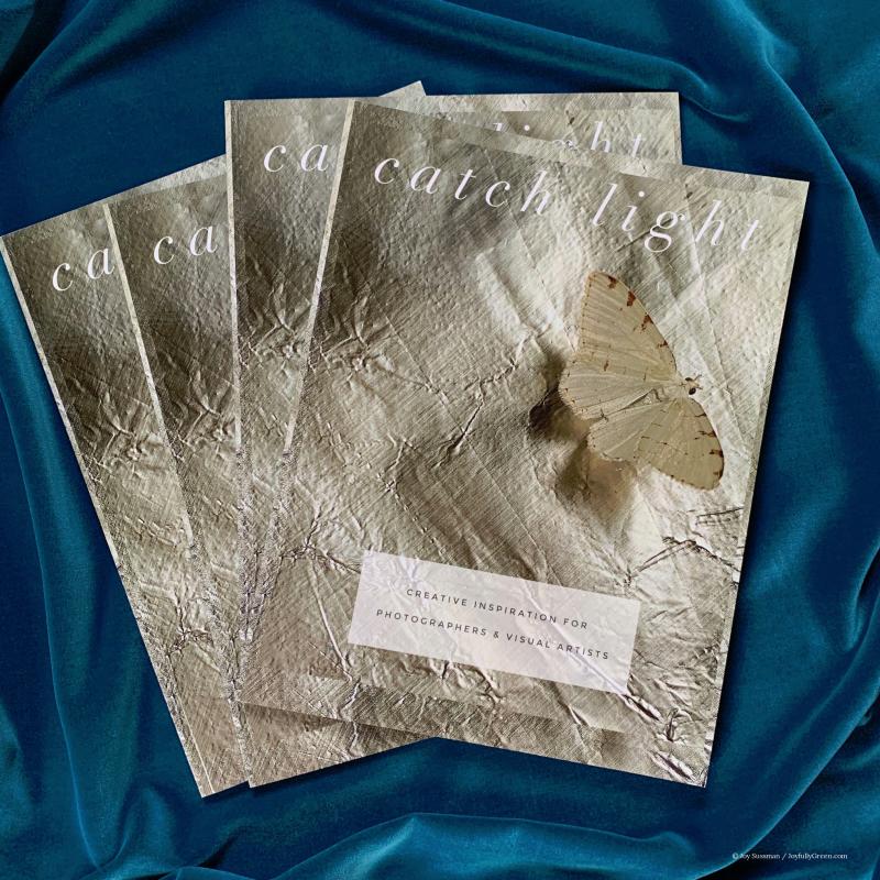 Catch Light Covers © Joy Sussman Joyfully Green LLC.jpe